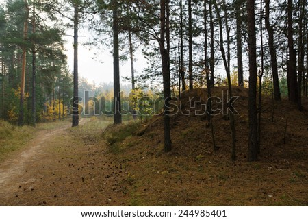 the forest road passes under branches of numerous trees - stock photo