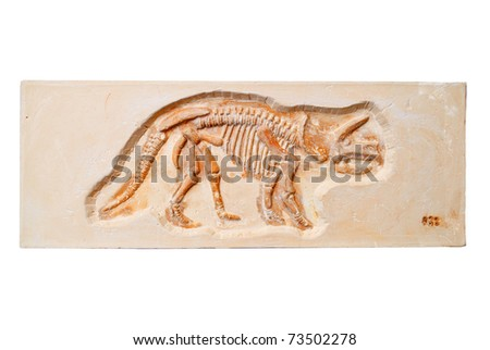 The fossil is on the white background - stock photo