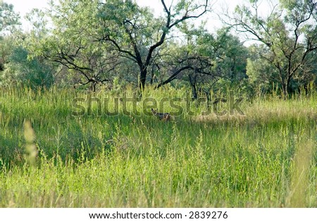 The fox hunts in a grass - stock photo