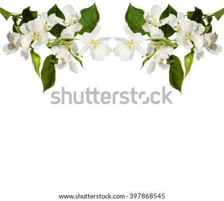 The frame of the branches of apple blossom. - stock photo