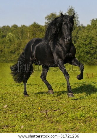 The free black horse run gallop on the field - stock photo