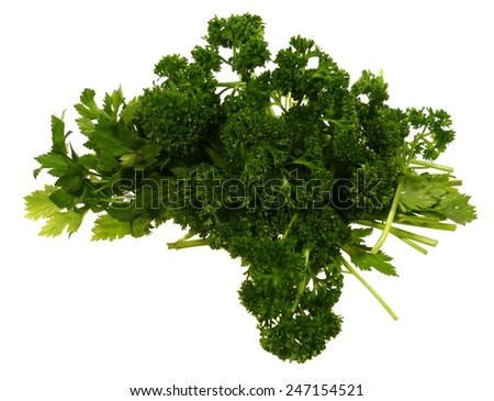 The fresh green leaves of a celery and a parsley plant over white - stock photo