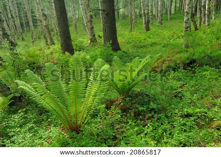 The fresh green of the fern - stock photo