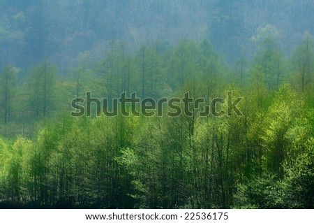 The fresh green of the virgin forest - stock photo