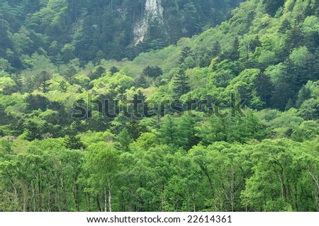 The fresh green to spread through the face of the mountain