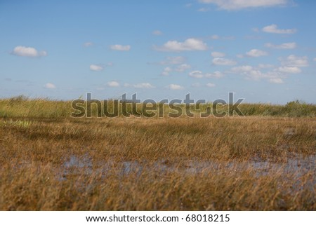 The freshwater prairies in the Everglades swamp in Florida - stock photo