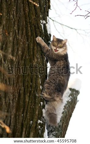The frightened cat climbs a tree