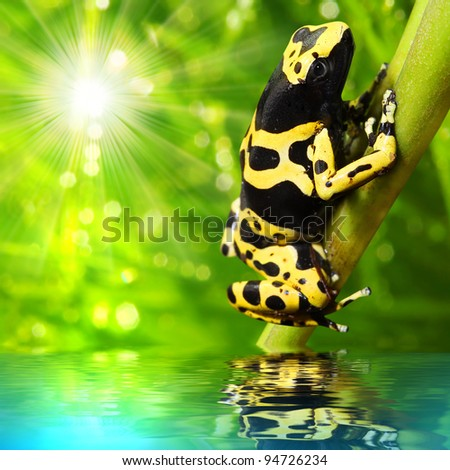 The frog (Dendrobates leucomelas) in a rainforest. - stock photo