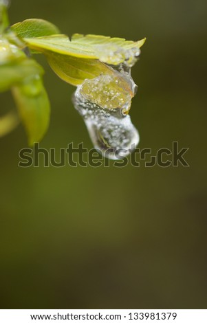 The frozen drops and snow on leaves, close up - stock photo