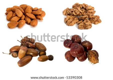 The fruits of almond, walnut, chestnut and acorn, isolated on a white background - stock photo