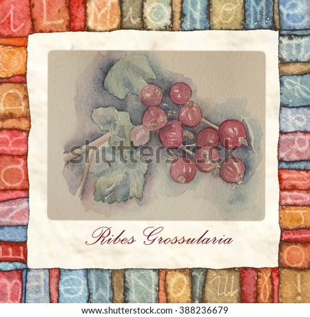 The fruits of the red currant. Hand drawn watercolor painting decorative can be used for wallpaper, pattern fills, web page background, surface textures, textiles, cards, postcards