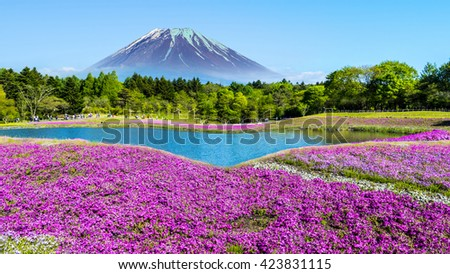 The Fuji with the field of pink moss at Shibazakura festival, Yamanashi, Japan