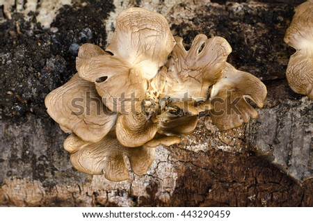 The fungus grows on a tree, a tree and a mushroom - stock photo