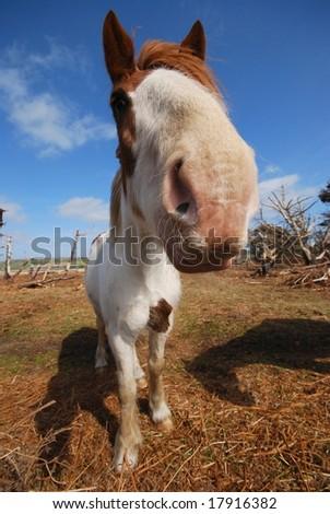 the funny horse - stock photo