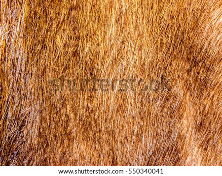 The Fur background and texture.