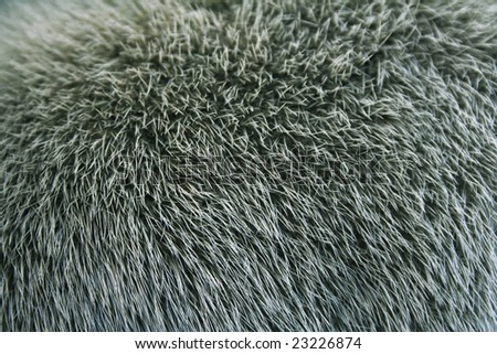 The fur of a mink painted green colour can use as a background texture - stock photo