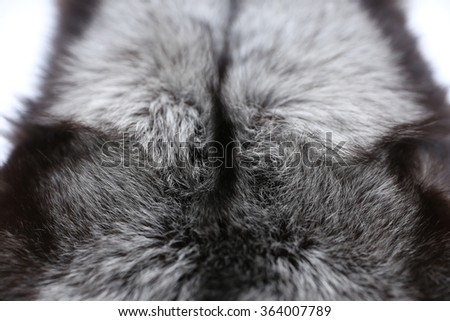 The fur of silver fox