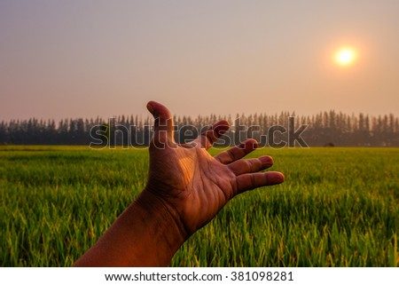 The future agriculture for food of our world,reaching hand up to the sun - stock photo