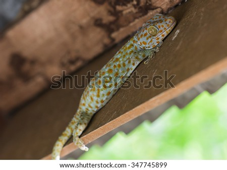 the gecko on wood