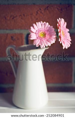the Gerber Daisy in vase - stock photo