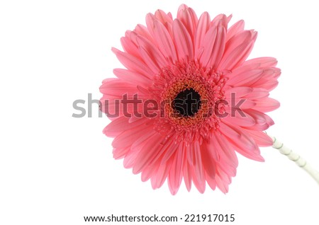 The gerbera flower isolated on white background - stock photo