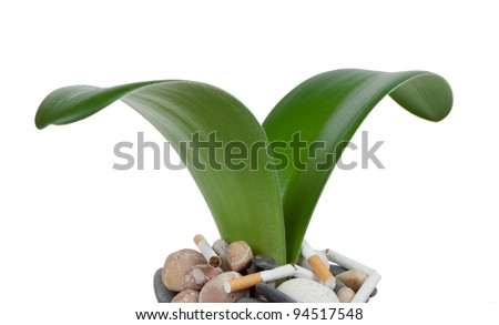 The germ of growing out of rocks with cigarettes - stock photo
