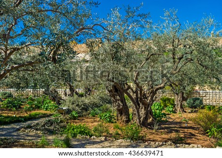 The Gethsemane Garden located at the foot of the Mount of Olives, Jerusalem, Israel. - stock photo