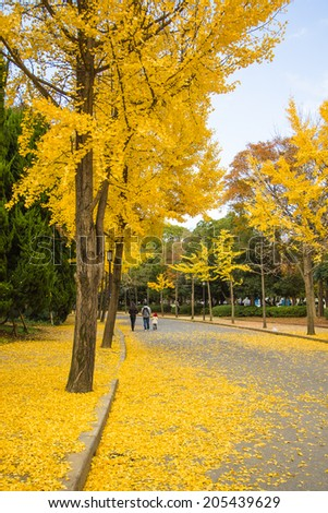 The ginkgo trees at Osaka , Japan - stock photo