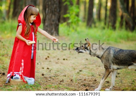 "the girl feeds a wolf.  the fairy tale "" Red Riding Hood"" - stock photo"