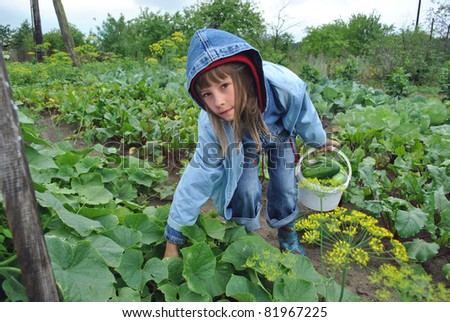 The girl reaps a crop of cucumbers on a kitchen garden - stock photo