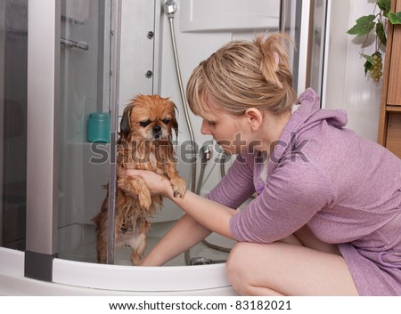 The girl washes a dog a Pekinese in a shower cabin