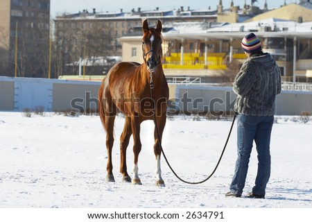 The girl with a horse in the winter on a hippodrome. - stock photo