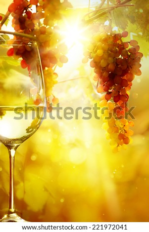 The glass of wine and Ripe grapes on a vine with bright sun background. Vineyard harvest season.  - stock photo