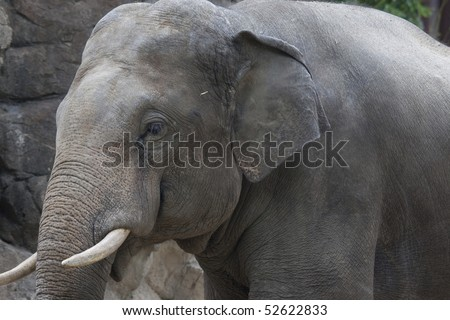 The glimpse of the elephant - stock photo