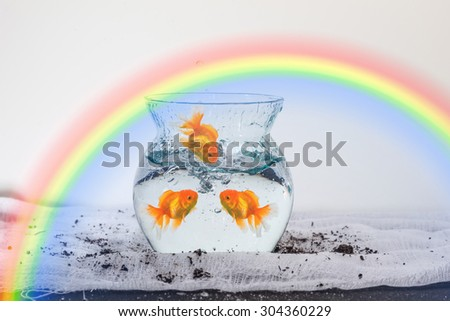 The goldfish in the fishbowl and jump to fishbowl have the colorful rainbow background. - stock photo