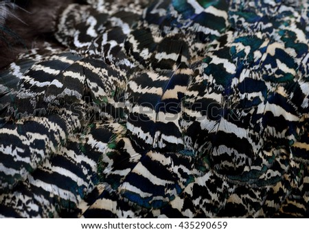 The grace camouflage brown and black texture on Indian Peacock body feathers, the most beautiful bird feathers background - stock photo