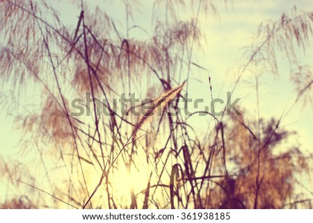 The grass flowers with soft focus, concept of the beautiful of nature, selective focused