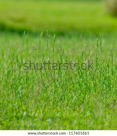 The grass in field. - stock photo