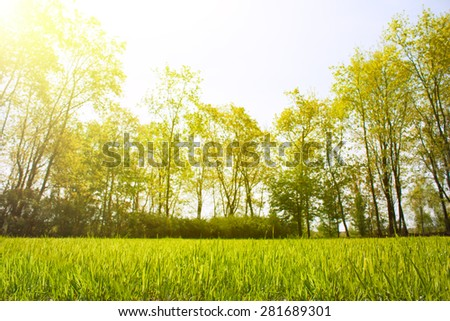 the grass in the park . trees in the background - stock photo