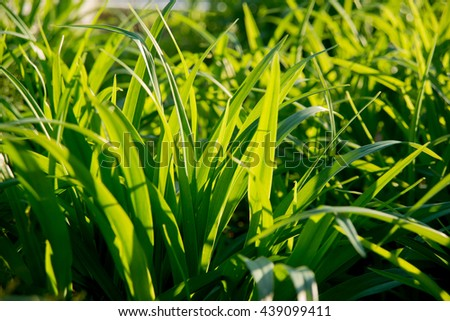 The grass in the sunlight. Beautiful background - stock photo