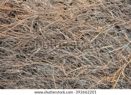 The grass is dry, dead on the floor for a backdrop.  - stock photo