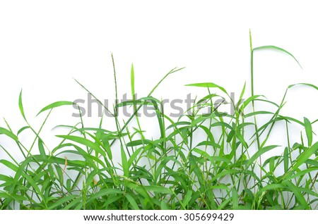 The grass isolated on white - stock photo