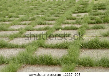 The grass which has sprouted through cracks in concrete plates - stock photo