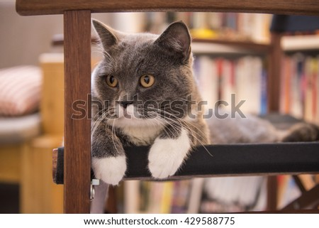 The gray cat lying on a chair