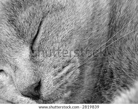 The gray cat sleeping on a bed