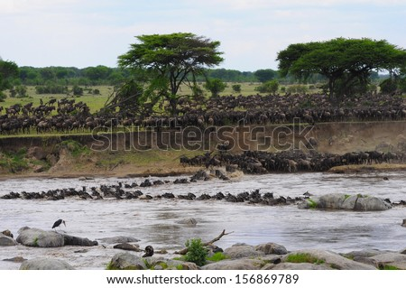 The Great Migration - stock photo