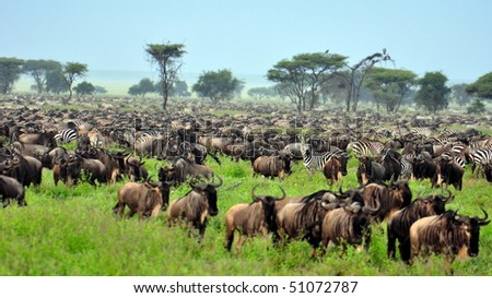 The Great Migration at Serengeti National Park, Tanzania - stock photo