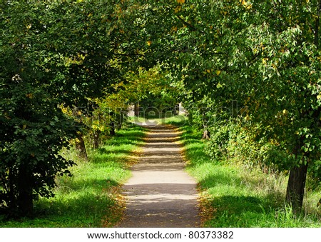 The green alley in summer. - stock photo