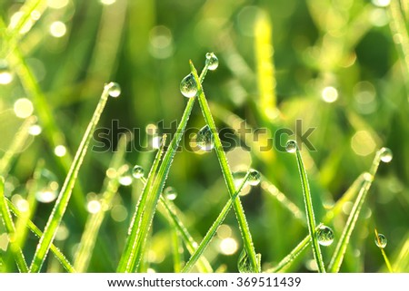 the green background from a grass on a lawn  close up - stock photo