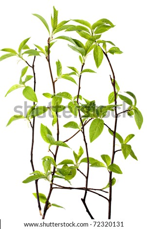 The green branch on a white background. - stock photo